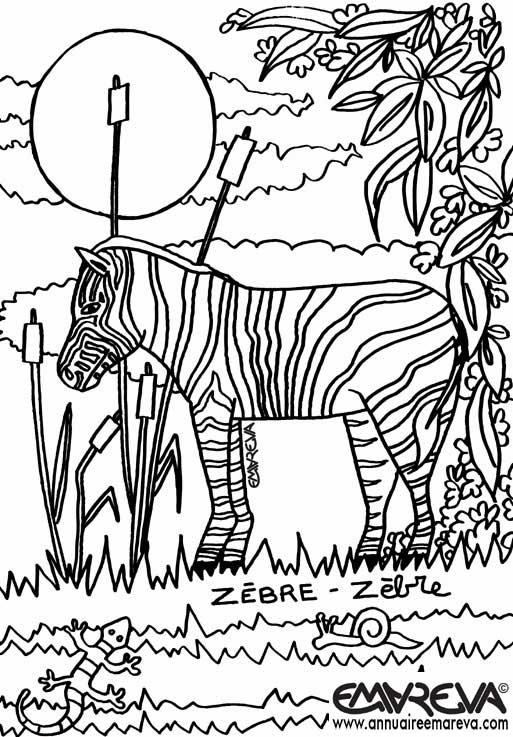 coloriage zou le zebre
