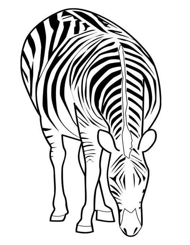 coloriage zebre en ligne