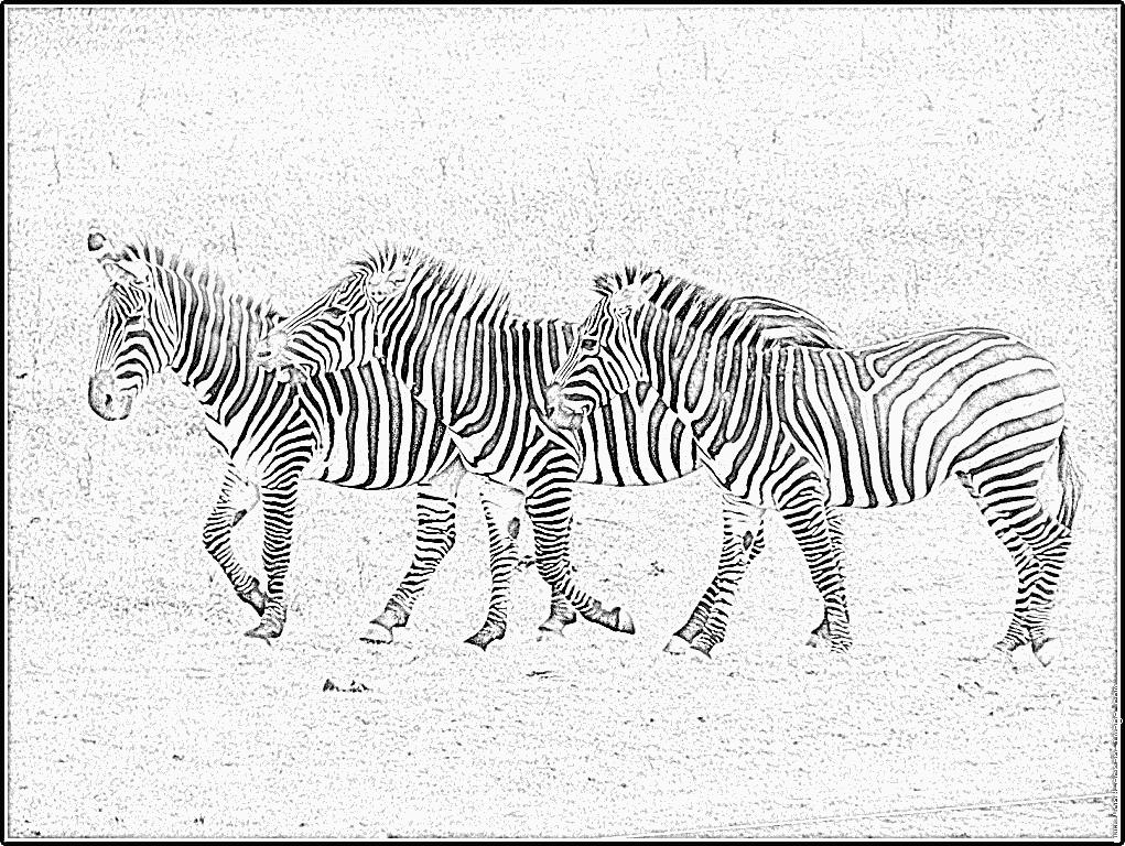 vrac dessin à colorier zebre