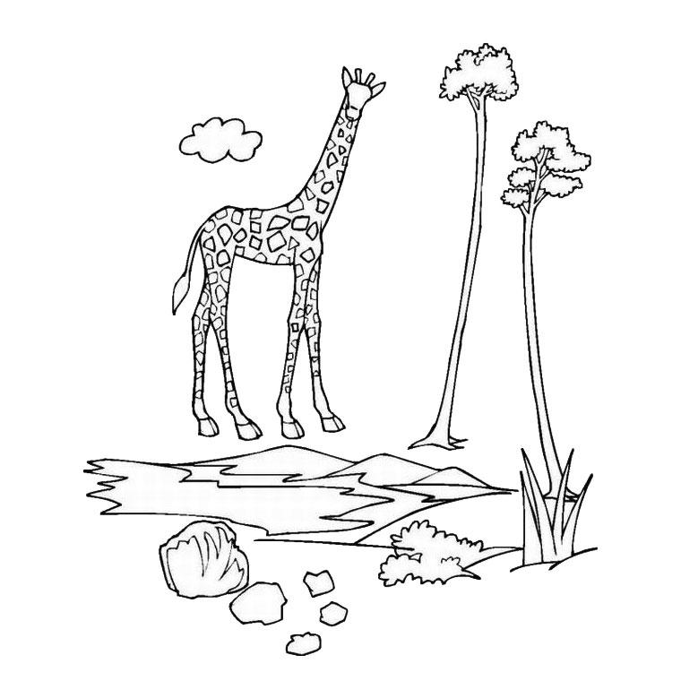 Coloriage des animaux du zoo en ligne - Coloriage animaux zoo ...