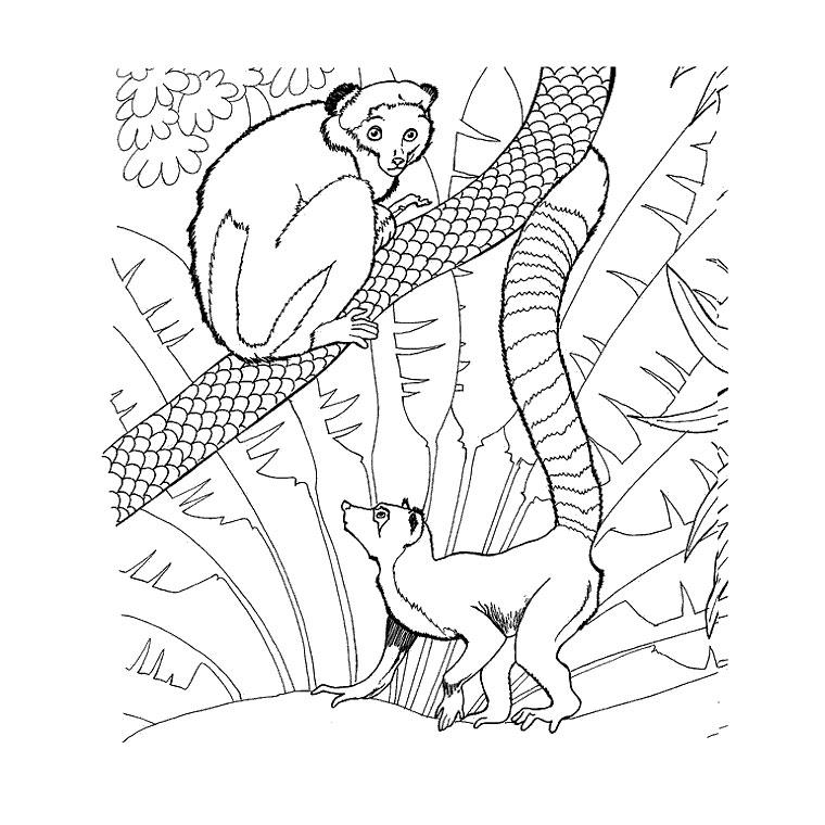 coloriage à dessiner zoo gulli