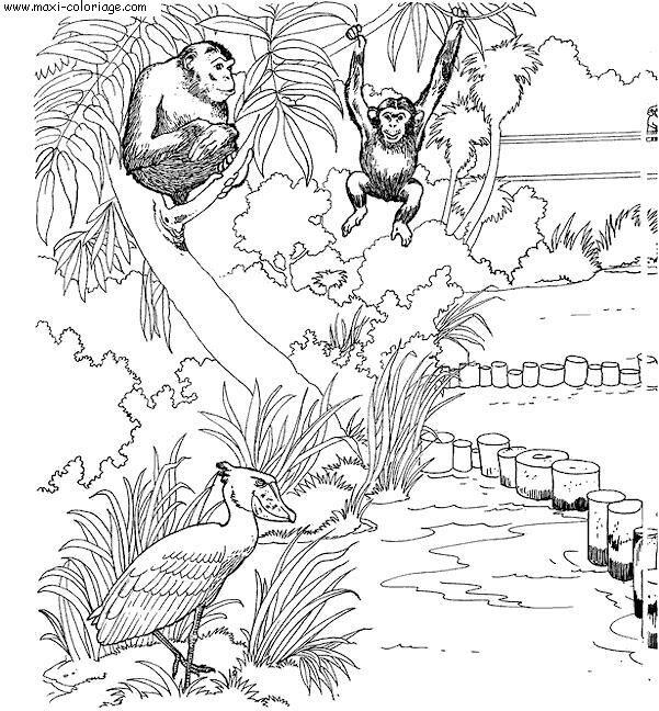 dessin zoo de beauval