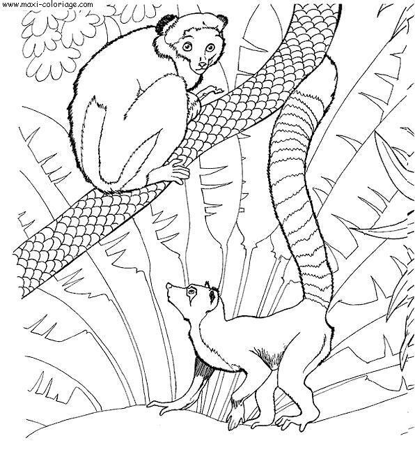 dessin à colorier le zoo à imprimer